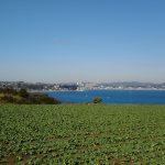 三浦半島だいこん畑